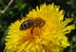 Vůně medu – slavnostní zahájení výstavy