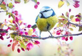Jarní dílnička
