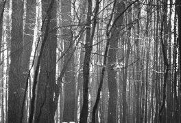 Josef Prodělal – Fotografie
