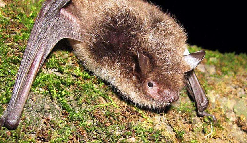 Podvečerní vycházka za netopýry